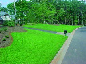 Hydroseeding helps grow your lawn